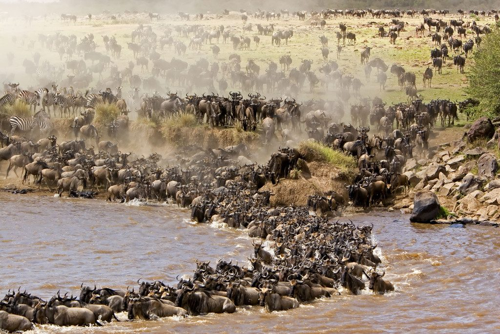 The-Wildebeest-Migration-Fun-Facts-about-the-Migration-1024x683-1-1024x683