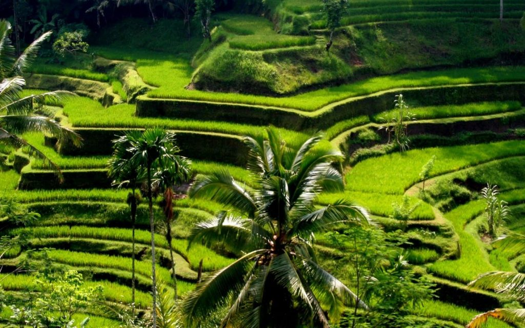 Tegalalang-Rice-Terraces-1024x640